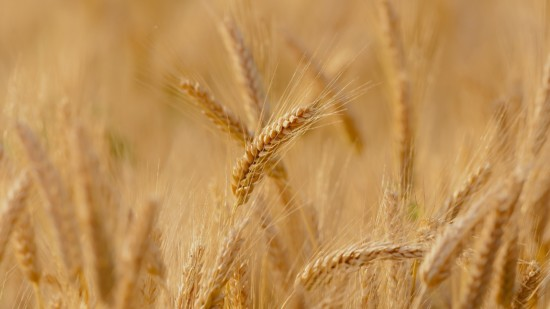 Landwirtschaft SPD MV